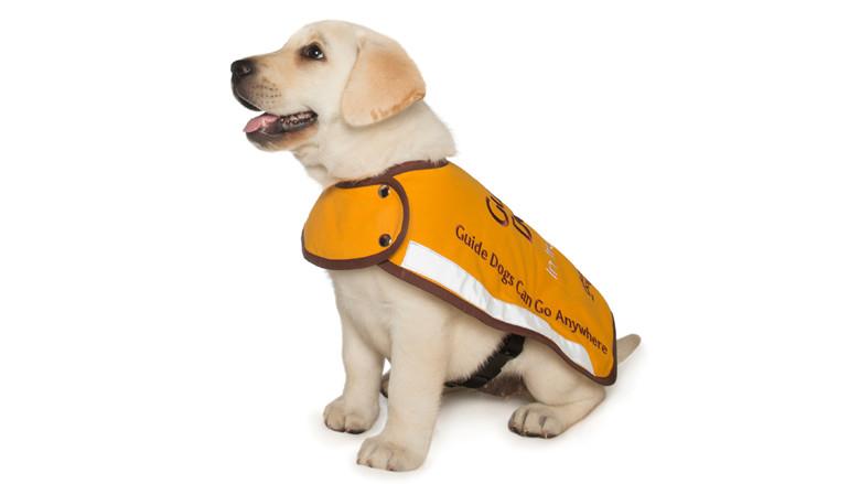 Guide Dogs WA
